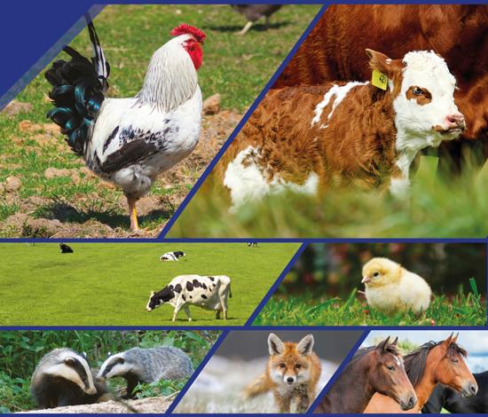 Eltech, la gamme élevage de CLOTSEUL